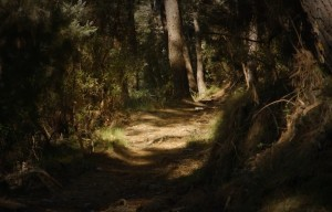 Monte Pisano sentiero