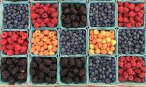 frutti di bosco 2