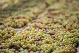 passito pantelleria uva