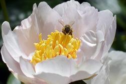 20 maggio giornata api