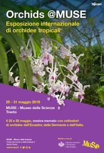 muse trento orchidee