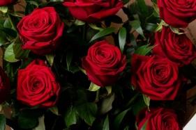 rose-rosse-1