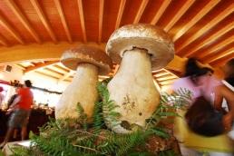 DTE-Associazione-Fungo-Porcino-di-Albareto-Fiera-Nazionale-12