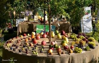 Frutti-Antichi-Credit-Francesco-Premoli-e-Daniela-Marchionni-17