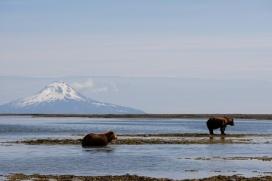 Alaska Sea Food 143