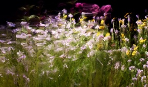 'Jardins d'Été', Quayola I1-3__A (04991)