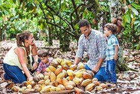 ruta cacao