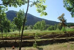 vegetazione_Monte_San Giorgio_Piossasco_3