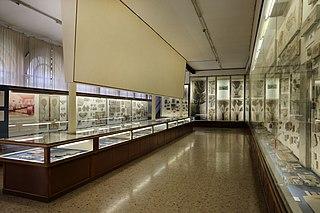 320px-Verona,_museo_civico_di_storia_naturale,_sale,_fossili_01