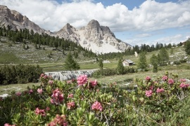 Excelsior Dolomites Life Resort - Attività estiva (5)