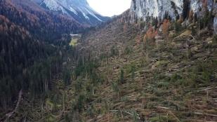 foto alberi abbattuti