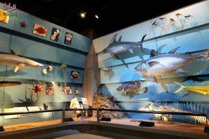 Museo-civico-di-scienze-naturali-Verona-1200x800